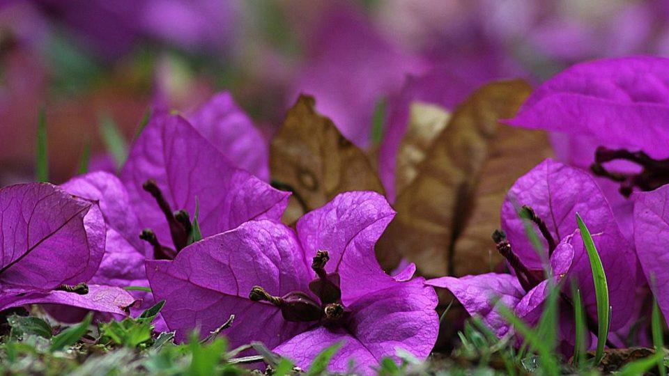 Kvetoucí popínavé rostliny
