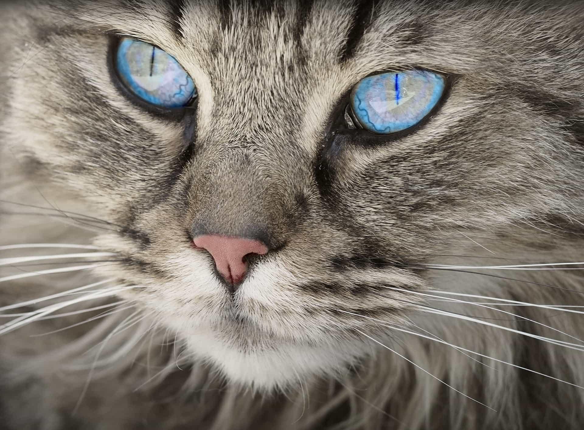 obrovské kočička obrázky