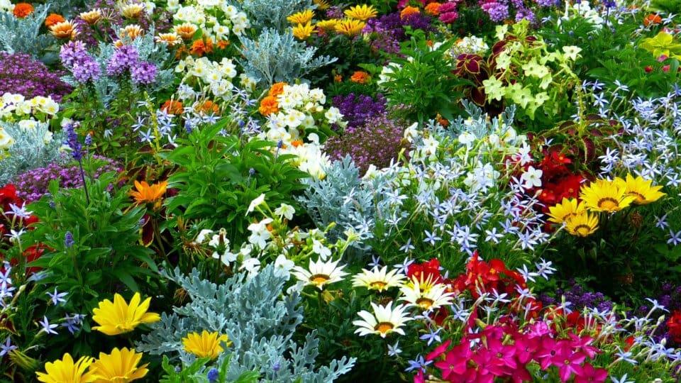 Květinová zahrada aneb inspirace pro každého