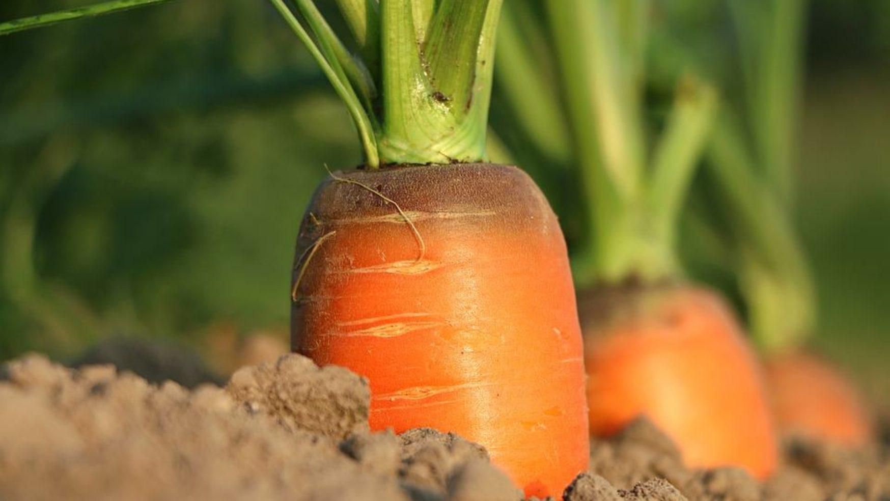 Moderní zeleninová zahrada nebo zahrada pro labužníky