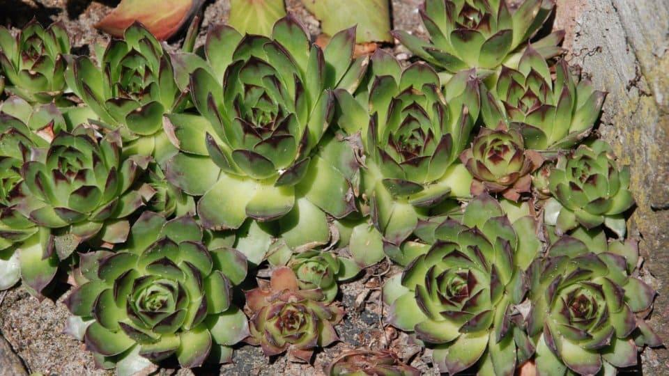 Skalky a květinové zídky