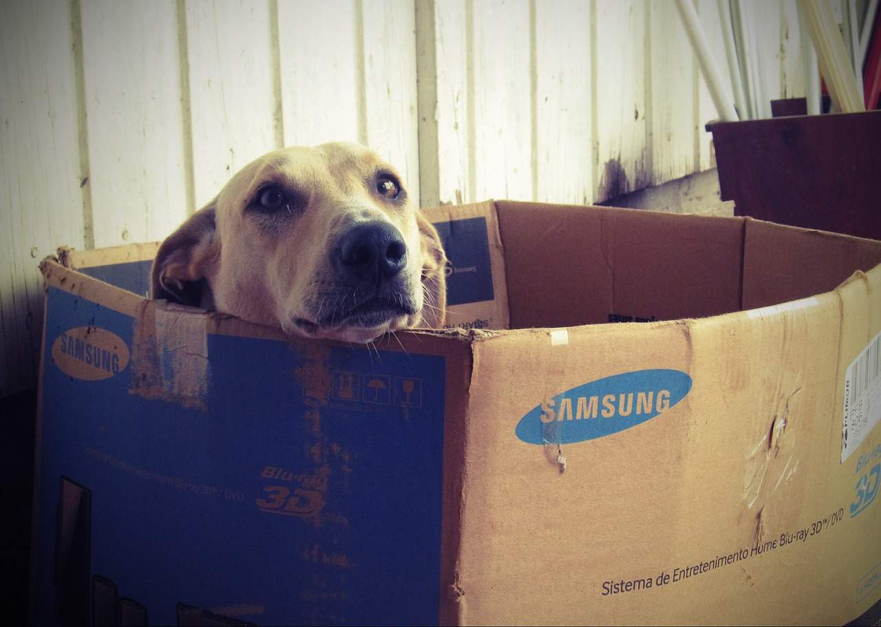 Pes v krabici