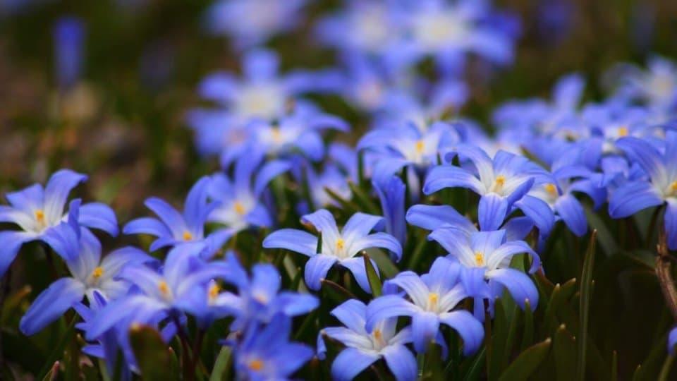 Jak vytvořit letní květinovou výzdobu?