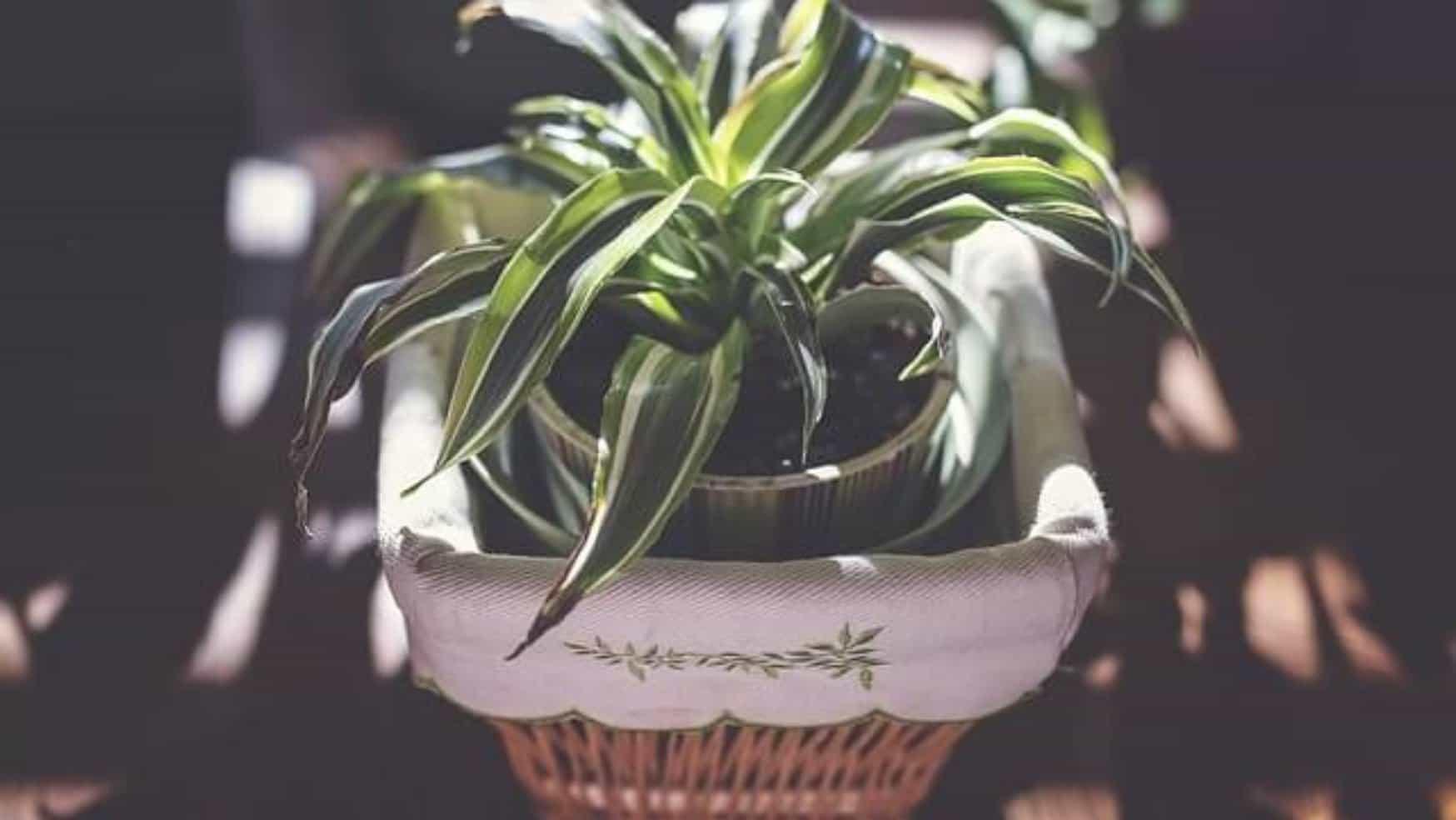 Nenáročné pokojové rostliny aneb rady a tipy